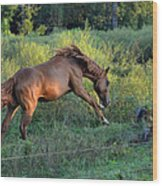 Sandy The Roan Cavorting  - C0094e Wood Print