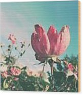 Sandy's Sea Rose Wood Print