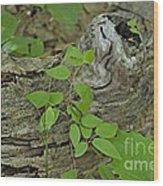 Sanford Vine Wood Print