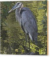 Sanibel Great Blue Heron Wood Print