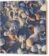 Sanibel Island Shells 1 Wood Print