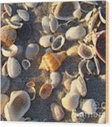 Sanibel Island Shells 2 Wood Print