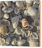 Sanibel Island Shells 3 Wood Print