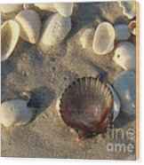 Sanibel Island Shells 5 Wood Print