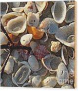 Sanibel Island Shells 6 Wood Print