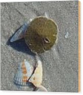 Sanibel Sand Dollar 1 Wood Print
