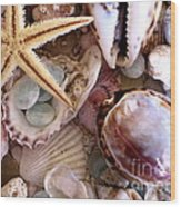 Sanibel Shells Wood Print