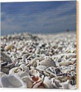 Sanibel Shells Wood Print