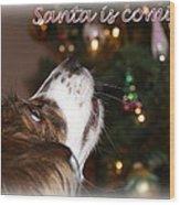 Santa - Christmas - Pet Wood Print
