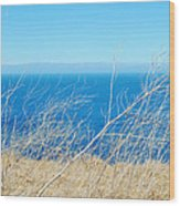 Santa Cruz Island Sea Of Grass Wood Print