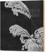 Santa Fe Feather Duster Wood Print