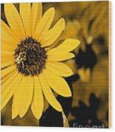 Santa Fe Sunflower 1 Wood Print