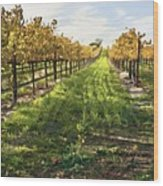 Santa Maria Vineyard Wood Print