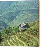 Sapa Rice Fields Wood Print
