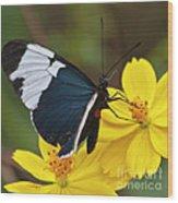 Sapho Longwing Yellow Oriented Wood Print
