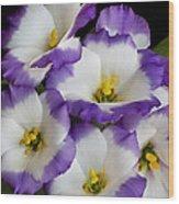 Sapphire Bluechip Lisianthus Wood Print