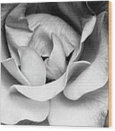 Sapphire Rose Bw Palm Springs Wood Print