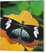 Sara Longwing Butterfly Wood Print