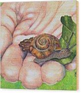 Sarah's Snail Wood Print