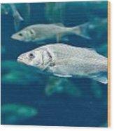 Sardines Wood Print