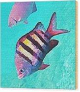 Sargeant Fish Wood Print