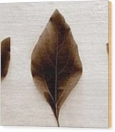 Sassafras Leaves In Sepia Wood Print