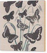 Satyridae Wood Print