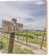 Sauvignon Blanc Grapes Growing In Vineyard Wood Print