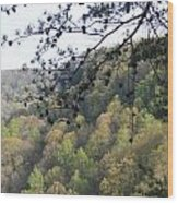 Savage Gulf Tennessee State Park Wood Print