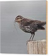 Savanah Sparrow Wood Print