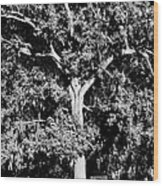 Savannah Graves Wood Print