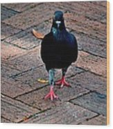 Savannah Pigeon Wood Print