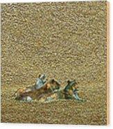 Savannah Queens Wood Print