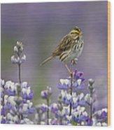 Savannah Sparrow And Nootka Lupine Wood Print