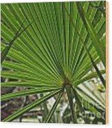 Saw Palmetto  Wood Print