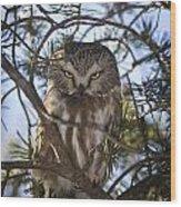 Saw Whet Owl Wood Print