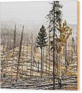 Sawback Burn, On Bow Valley Parkway Wood Print