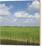 Sawgrass In The Florida Everglades Wood Print