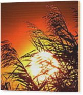 Sawgrass Sunset  Wood Print