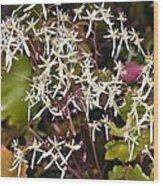 Saxifrage (saxifraga Fortunei 'wada') Wood Print