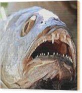 Fanged Fish Say Ahhhhhh Wood Print