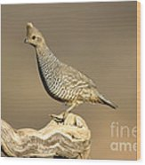 Scaled Quail Callipepla Squamata Wood Print
