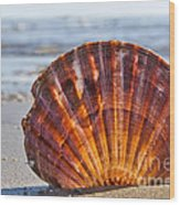 Scallop Shell 2 Wood Print