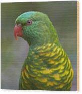 Scaly-breasted Lorikeet Australia Wood Print