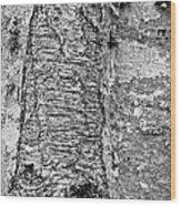 Cicatrix Wood Print