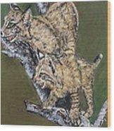 Scaredy Bobcats Wood Print
