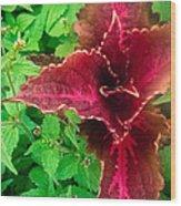 Scarlet Cross Wood Print