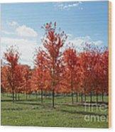 Scarlet Formation Wood Print