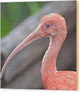 Scarlet Ibis 1 Wood Print