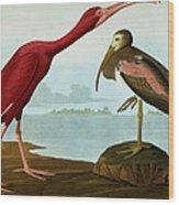 Scarlet Ibis Wood Print